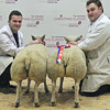 Aberdeen Christmas Classic 2013 Butchers' Lambs Champions, a pair of Beltex crosses weighing 44kg each and selling for £320/head.