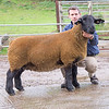 A ewe from Stuart Davies of Bucknell, Shropshire sold for 3,100 gns.