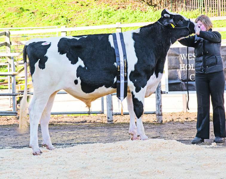The Wexham Cup champion, Aintree Eveready from Aintree Holsteins of Hope, Wrexham.
