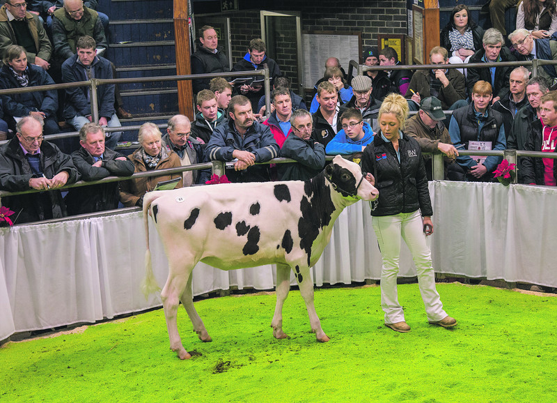 Wiltor Numero Uno Candice from C. Jones of Wilcrick, Magor, Monmouthshire sold for 8,000 gns.