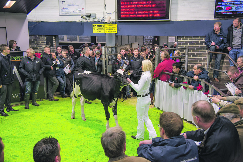 The sale's top price at 10,200 gns, Knowlesmere Brax Missy from A. and J. Whittaker of Weston Under Recastle, Shrewsbury, Shropshire.