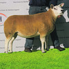 Top price from the Twilight Sale, Lot 292, sold for 6,200 gns.
