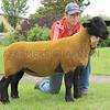 Carlisle Suffolk shearling