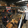 Auctioneer Joe Worthington selling spring lambs at Clitheroe auction mart.
