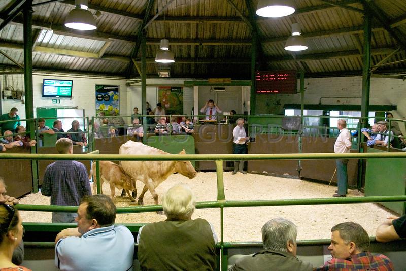 Darlington Farmers Auction Mart, Bank Holiday Bananza