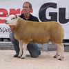 The supreme champion, ram lamb Arkle UFO from G. H. and G. G. Wilkinson of Arkleby , Aspatria, Cumbria.