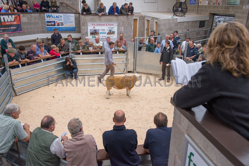 Lot 79. Shearling ram Teiglum Tin Tin from James Robinson selling for 1,100 gns.