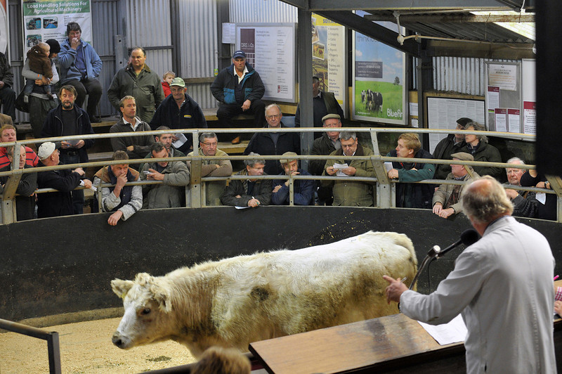 Herefords Sale hereford 12.10.13