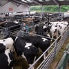 The dispersal of organic Holstein Friesian and Brown Swiss cows from J. E. J. Harrison and Son, Crow Hill farm, Wilden, Bedfordshire.