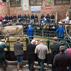 A Brown Swiss cross selling for £1620.