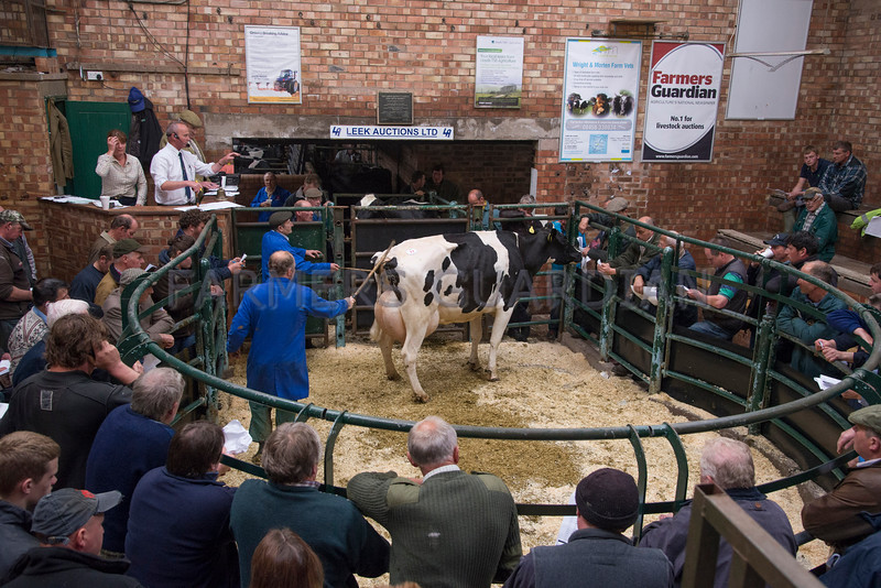 A cow selling for £2100.
