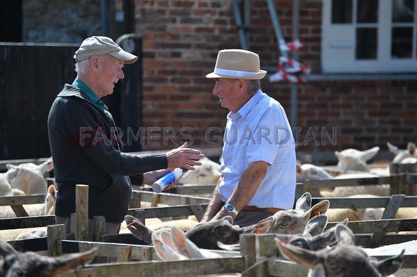 Malton Sheep Sale July 26 2013