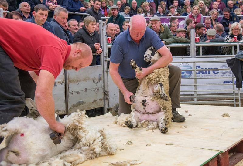 Peter and David Bland hand shearing.