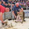 Peter and David Bland hand shearing.