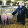 Newark Xmas pigs