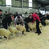 Skipton lamb judge