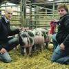 Skipton pigs