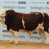 Stirling Simm 8,500 (2)
