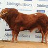 Stirling Lim 15,000