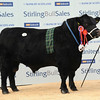 Stirling AA Int champ