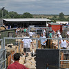 Thame Sheep fair 2013