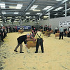 Welshpool Multi-breed sheep sale 3/10/13