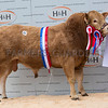 Drumraymond Mr Mole - Overall Blonde Champion - 5500gns