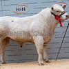 Hendy Messi - 8000gns