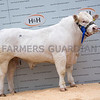 Goldies Landlord - 8000gns