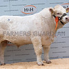 Goldies Limelight - 9000gns