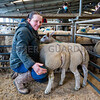 Champion pair of lambs, a pair of Texel cross Beltex weighing 39kg each from Claire Tomlinson.