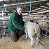 Overall Prime lamb champion a Texel cross weighing 39kg from R Swift and Sons, seen here with Judge Jeff Plant.