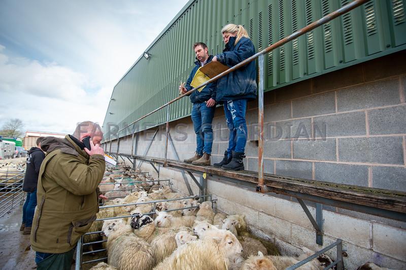 Auctioneer Mark Jones selling prime lambs and sheep.