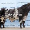 "Stirling Bulls Oct 2021Shorthorn ""Muiresk Northern Dancer "" sold for 14,000gns from S G Mair & Sons, Kinnermit, Turriff."