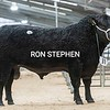 """Stirling Bulls Feb 2021 AA Lot 31 """"Rulesmains Kai""""<br /> FromAndrew S Hodge, Rulesmains Farm, Duns.<br /> Sold for 11,000gns"""