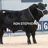 "Stirling Bulls Feb 2021 AA Lot 83 'Gordon Phoenix"""" from Trustees of Gordon Brooke, Upper Huntlywood Farm, Earlston.<br /> Sold for 10,000gns"