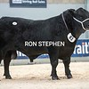 """Stirling Bulls Feb 2021 AA Lot 83 'Gordon Picasso"""" from Trustees of Gordon Brooke, Upper Huntlywood Farm, Earlston.<br /> Sold for 10,000gns"""