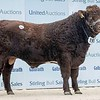 """Stirling Bulls Feb2021<br /> Shorthorn Lot 193 """"Glenisla Nicholas"""" from Major P O Gibb, Glenisla House, Blairgowrie."""