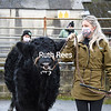 Welsh Black Cattle Society 65th Annual Winter Sale 5th Jan 2021