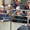 Carlisle Dairy Bulls 5526