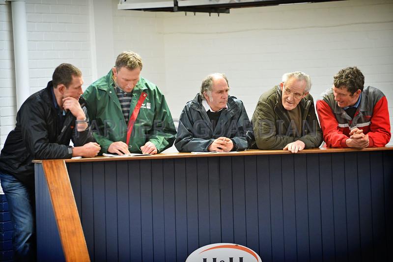 Carlisle Dairy Bulls 5447