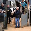 Carlisle Dairy Bulls 5531