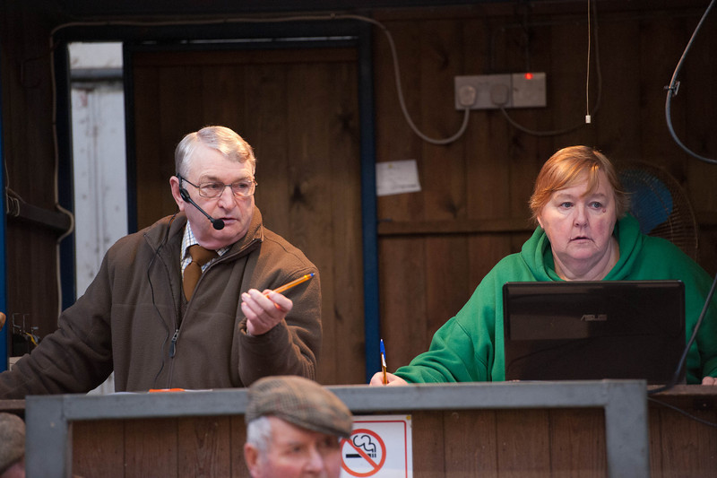 Auctioneer Willy Bramham selling calves.