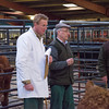 Brian Phillips from Northallerton judging the New Year Prize Show and Sale of Store Cattle and feeding Bulls at Leyburn mart.