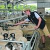 Monmouth Livestock Centre Sheep Sale 15/08/14