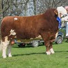 The reserve Simmental champion, Shannock Danny Boy from Mr. I. and Mrs. J. Turvey sold for 3,000 gns.<br /> Lot 52.