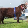 Lincoln Red Holyoak Orchid from Mr. R. J. and Mrs. G. Goodwin sold for 2,200 gns.<br /> Lot 67.