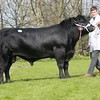 Aberdeen Angus St Fort Paxman from A. Mylius and Partners sold for 3,800 gns.<br /> Lot 31.