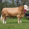 The Simmental champion,Tilbrook Drake from P. N. Burgess. Not sold.<br /> Lot 51.