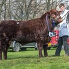 Lincoln Red St. Fort Rolex from A. Mylius and Partners sold for 6,200 gns.<br /> Lot 16.